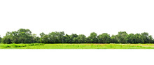 View Of A High Definition, Treeline  Isolated On White Background, Forest And Foliage In Summer, Row Of Trees And Shrubs.
