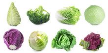 Set With Assortment Of Cabbages On White Background. Banner Design