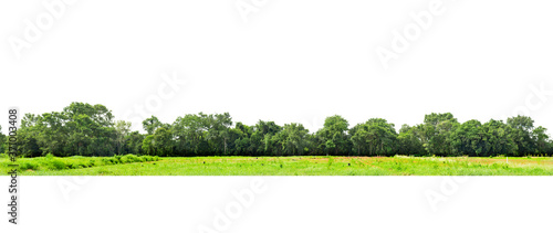 Fotomural View of a High definition, Treeline  isolated on white background, Forest and foliage in summer, Row of trees and shrubs