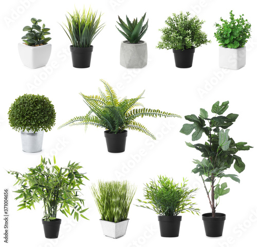 Canvas-taulu Set of artificial plants in flower pots isolated on white