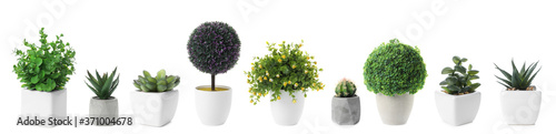 Obraz Set of artificial plants in flower pots isolated on white. Banner design - fototapety do salonu