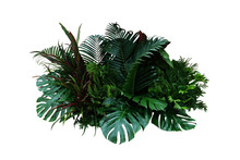 Tropical Foliage Plant Bush (M...