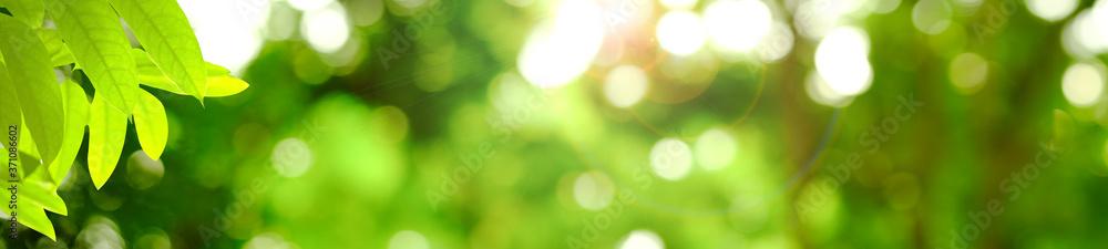 Fototapeta Green leaf in sunny blurred background