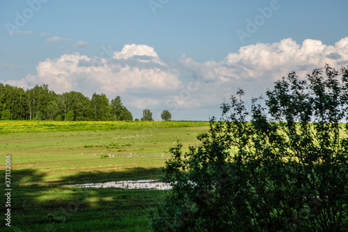 Fototapeta Landscape of meadow, forest and clouds obraz na płótnie