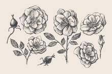 Set Of Hand-drawn Rose Hip Flo...