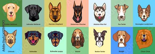 Vector illustration collections of dogs breeds Slika na platnu