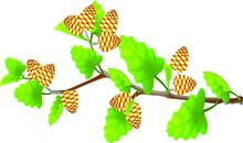 Alder Twig With Beige Cones