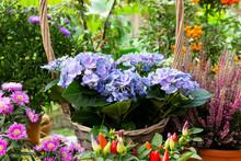 Blue Flowers On A Background O...
