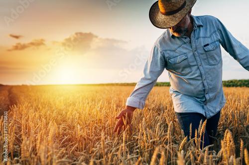 Carta da parati farmer walking through wheat field, sunset scene