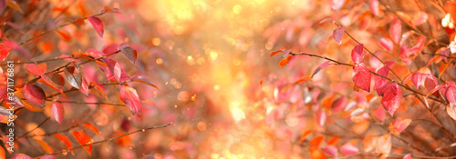 Fotografie, Tablou bright autumn nature background with red fall leaves