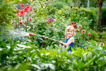 Beautiful Little Toddler Girl Watering Garden Flowers With Water Hose On Summer Day. Happy Child Helping In Family Garden, Outdoors, Having Fun With Splashing