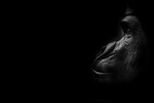 Portrait Artistique D'un Goril...