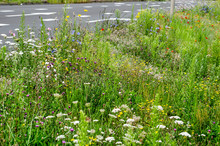 Tall Grass And Wildflowers In Various Colors Grow Plentyful By The Side Of A Main Traffic Road  In Summer In The Town Of Zwolle, The Netherlands