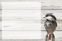 Bird And Barn Wood Background ...