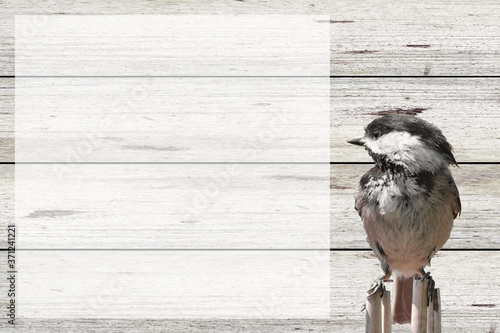 bird and barn wood background with room for words and dates Canvas Print