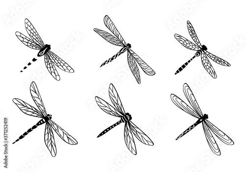 Hand drawn dragonfly set Fototapet