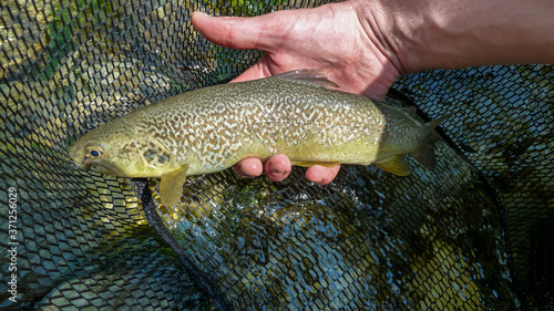 Obraz na plátně A fisherman holding a rare Marble Trout caught on a fly from the Soca River in S