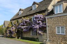 A Wisteria Covered Window Of A Cotswold Stone House In Prestbury, Gloucestershire, England.