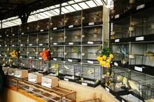 The Bird Market, Ile De La Cit...