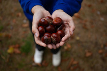 Collected Conkers