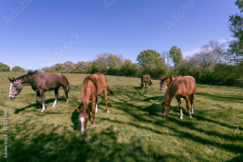 Obraz na plátně horses grazing in a field