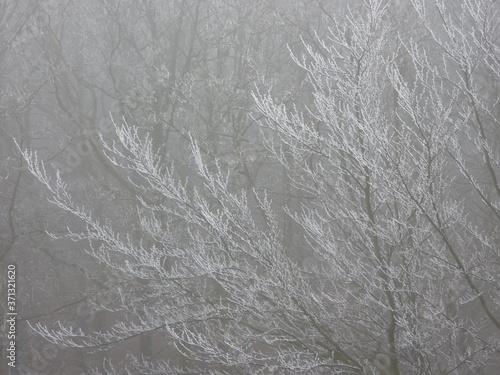 Obraz na plátně Frost