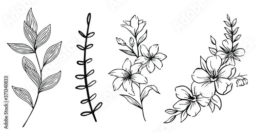Photo Plantas y flores silueta blanco y negro, ramas y vegetación