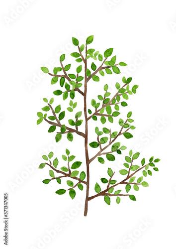 Photo 緑の葉っぱがついた木の枝 水彩イラスト