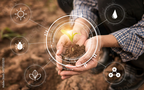 Fototapeta Smart farming with IoT,Growing corn seedling with infographics. Smart farming and precision agriculture 4.0, agriculture concept obraz