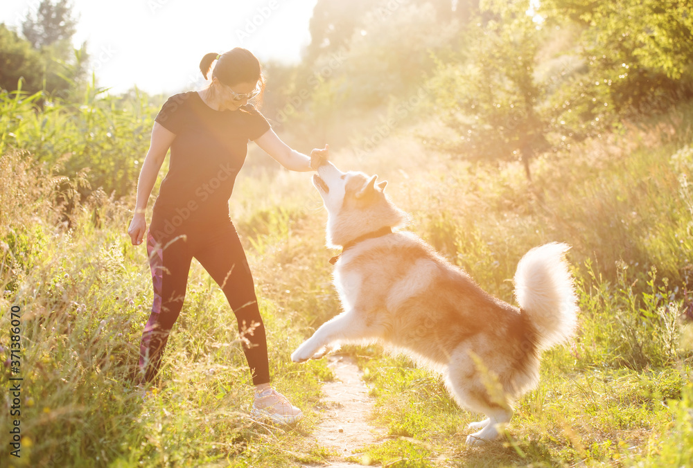 Fototapeta Woman training domestic dog to stand on hind legs outdoors
