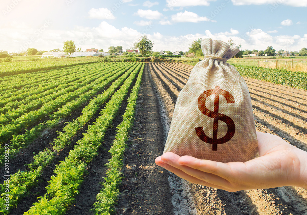 Fototapeta Hand holds out a dollar money bag on a background of a carrot plantation. Support and subsidies. Farm loans. Lending farmers for purchase land and seed material, modernization. Revival of the village.