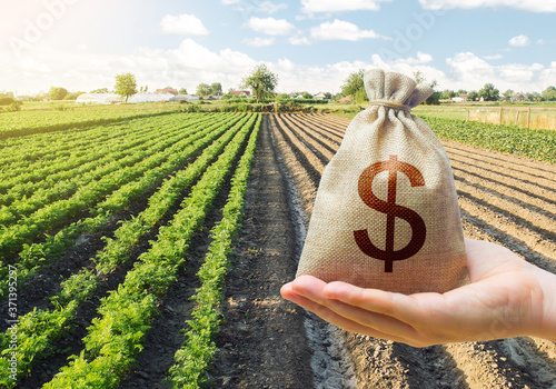 Fototapeta Hand holds out a dollar money bag on a background of a carrot plantation. Support and subsidies. Farm loans. Lending farmers for purchase land and seed material, modernization. Revival of the village. obraz