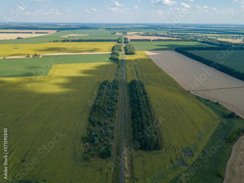 Aerial drone view. Sunflower field in Ukraine Fototapeta