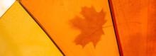 Umbrella With A Leaf In The Au...