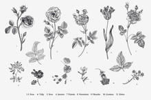 Flowers. Set. Botanical Floral Vector Illustration. Black And White