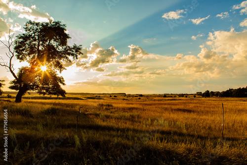 Fotografie, Obraz steppe landscape with the setting sun
