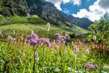 Flowering Meadow, Sad Valley, ...