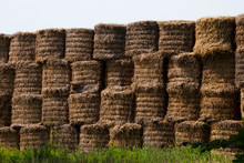 Hay Large Bales -Round Bales Are Harder To Handle Than Square Bales But Compress The Hay More Tightly. This Round Bale Is Partially Covered With Net