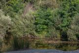 Fototapeta Fototapety do łazienki - krajobraz rzeka las drzewa liście woda lato natura trawa zieleń