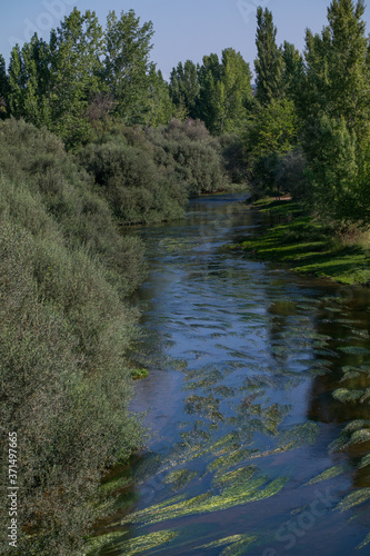 krajobraz rzeka las drzewa liście woda lato natura zieleń