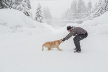 Caucasian Man Playing Tug-of-war With Dog In Snow