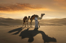 Man Leading Camels In Desert During Sunset
