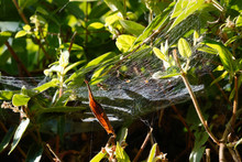 A Spider's Web Stretched Betwe...