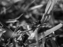 Insect On The Grass