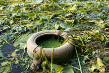 Car Tire Lies In The River In The Seaweed On The Banks Of The Dnieper River In Summer, Environmental Pollution