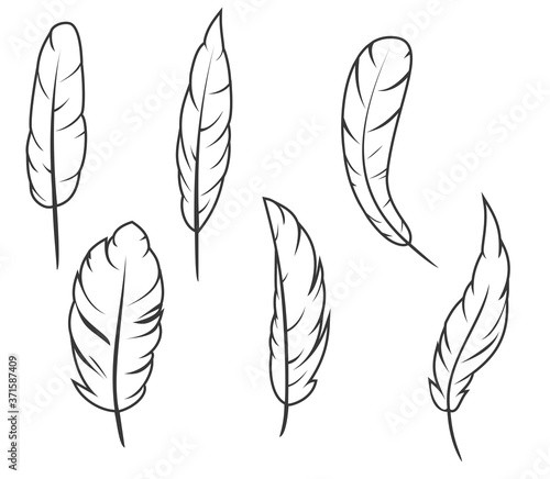 Photo Set of hand drawn feathers different shapes in minimalistic monochrome cartoon style