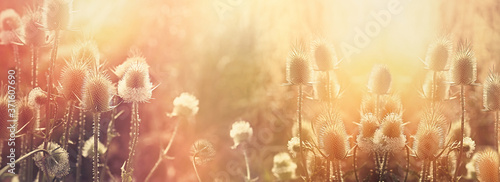 Plakaty do salonu  dry-thistle-dry-burdock-beatiful-sunset-landscape-in-meadow