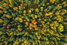 Aerial Top View Of  Yellow And...