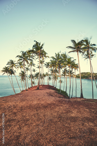 Okleiny na drzwi - Krajobraz - Pejzaż  coconut-palm-trees-at-sunset-color-toned-picture-summer-vacation-concept