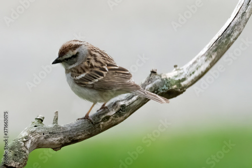 Foto A sparrow perched on a branch